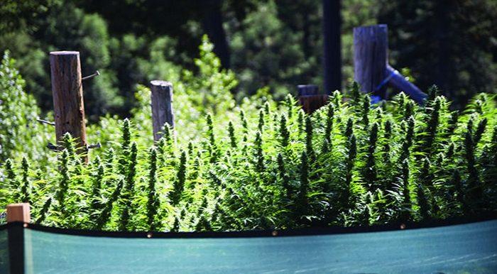 Как вырастить урожай в открытом грунте