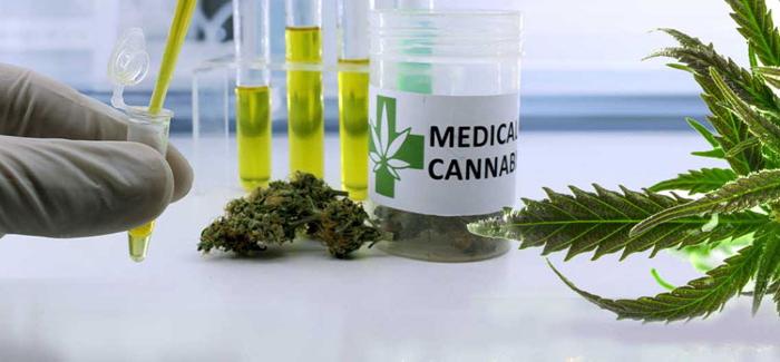 cannabis change the world, конопля изменит мир, самое доброе растение, без улыбки не останешься, применение конопли, использование каннабиса, применение каннабиса,