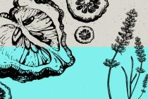 Что такое Оцимен и что делает этот конопляный терпен?